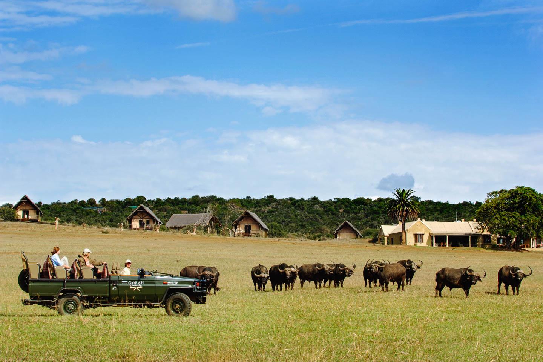 eastern cape safari national park safari