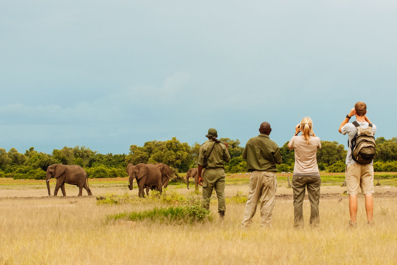 February walking malaria free safari