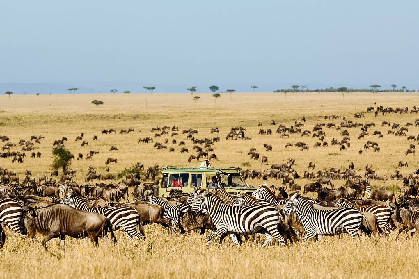 serengeti best time to go to tanzania