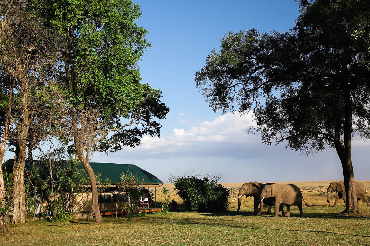 serengeti safari camps Great Wildebeest Migration governors camp exterior tented suite wildlife up close elephants