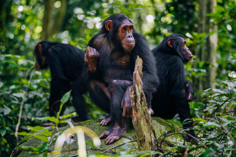 tanzania travel tips mahale mountains chimp trekking