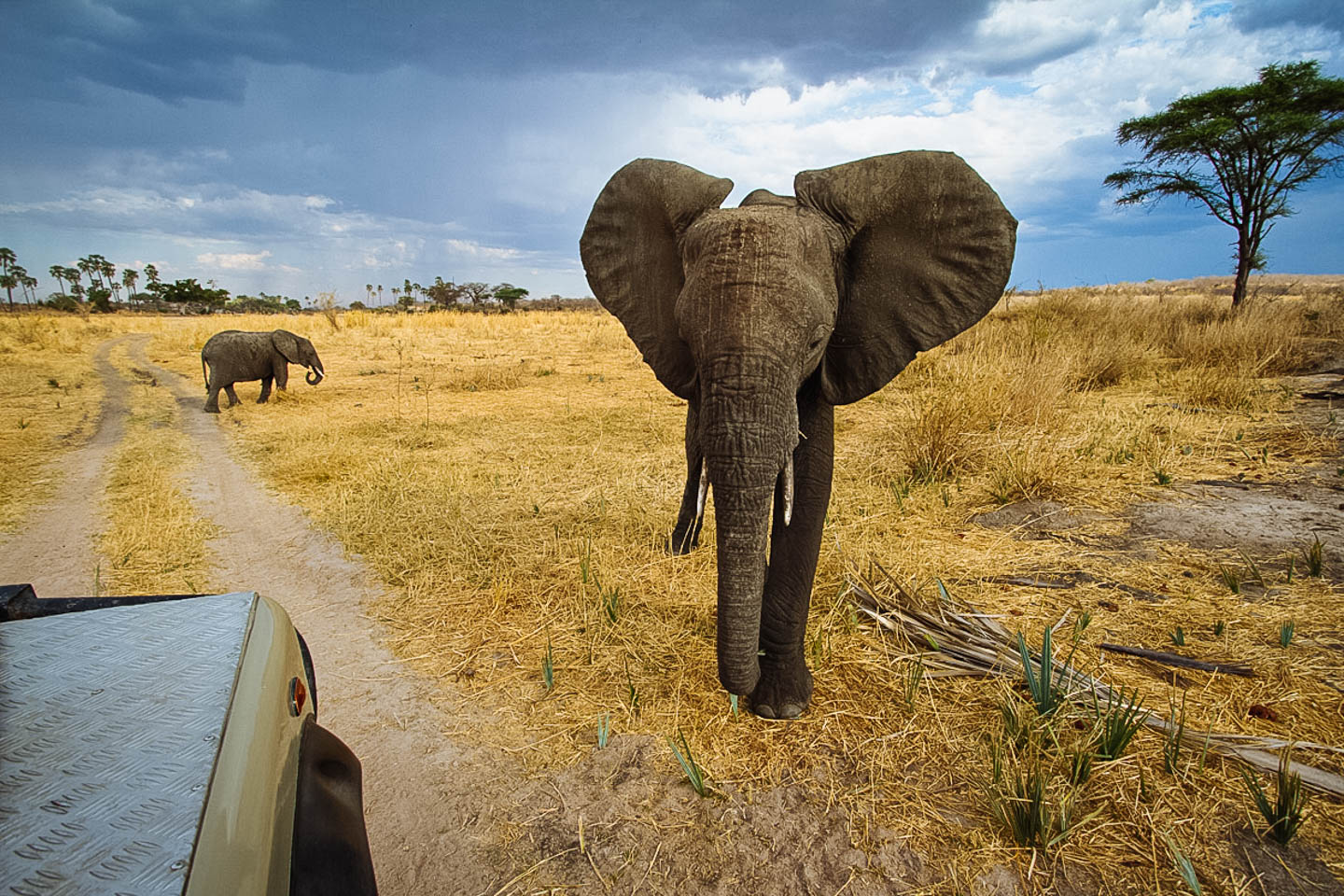 tanzania travel guide-ruaha-national-park-game-drive-wildlife-elephants-timbuktu-travel