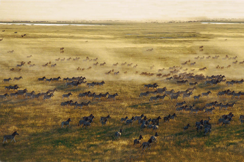 tanzania travel tips serengeti great migration zebra
