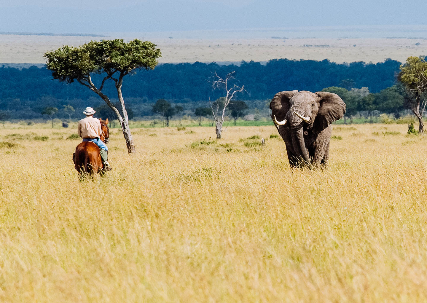 Kenya travel tips - our top ten on everything you need to know