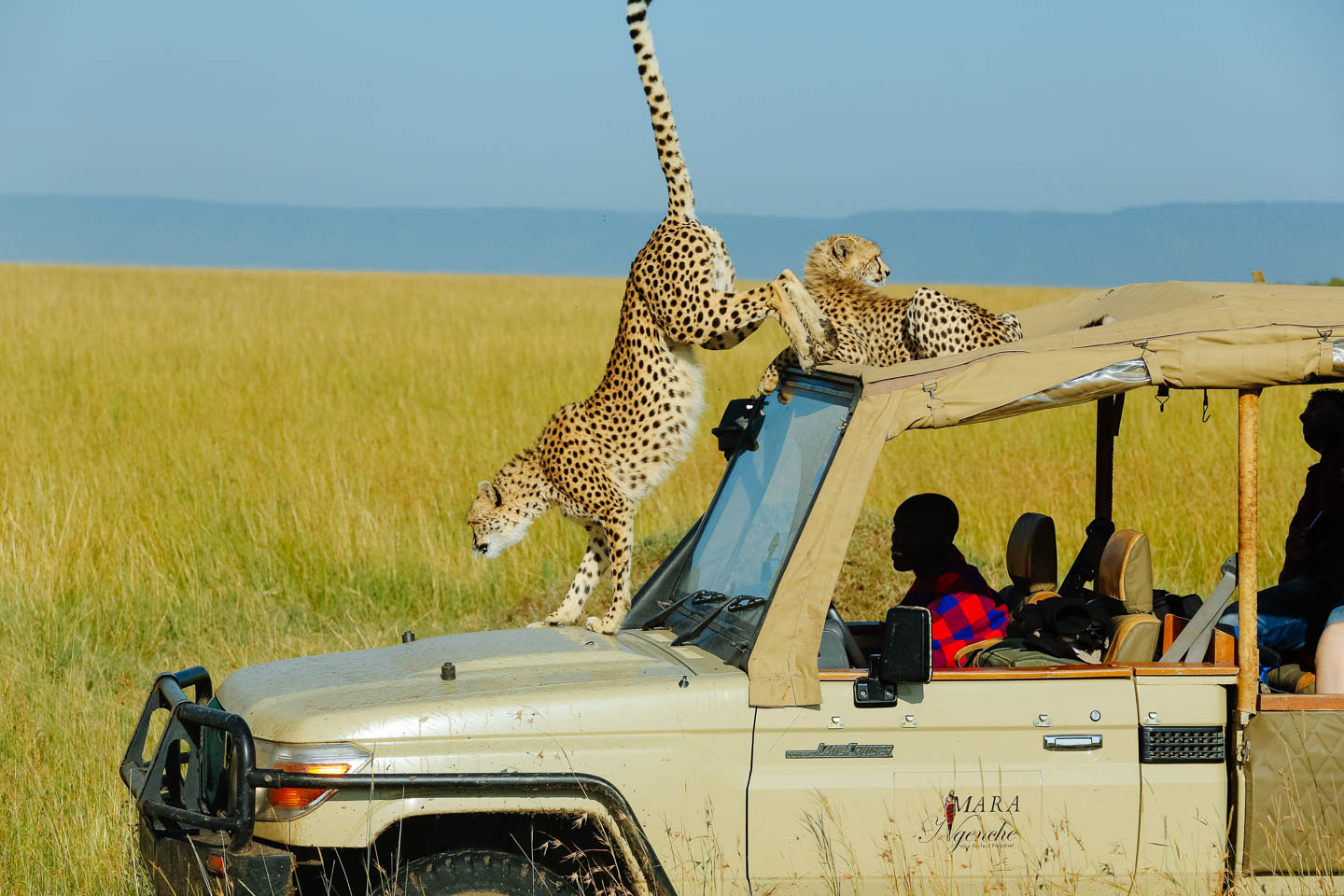 kenya travel guide african safari destinations